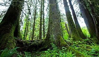 35 millioner til forskning på skog og klima