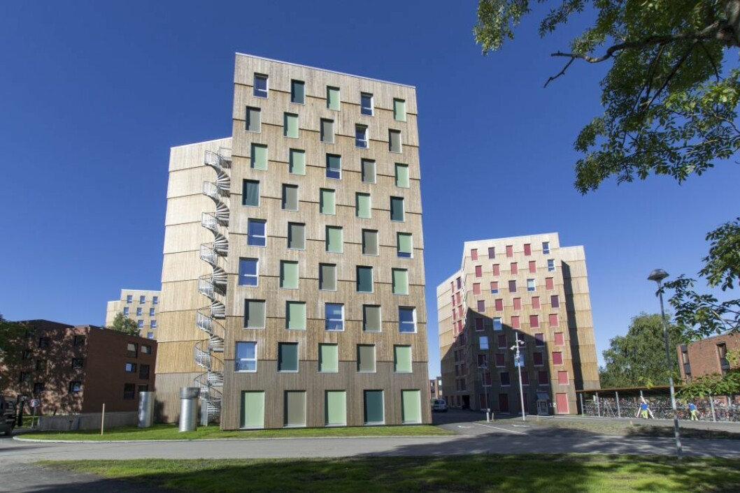 Med sine 9 etasjer er Moholt 50|50 i Trondheim de (enn så lenge) høyeste studentboligene bygget i massivtre i Norge. (Foto: MDH Arkitekter)