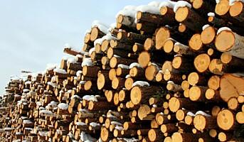 Henter sukker fra tømmerstokker