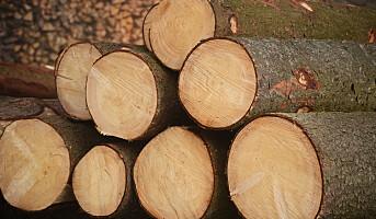 – Stor usikkerhet i tømmermarkedet