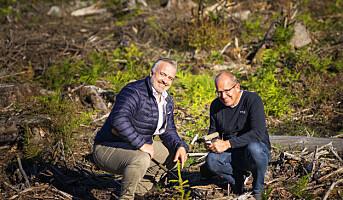 Trapperingen planter ny skog