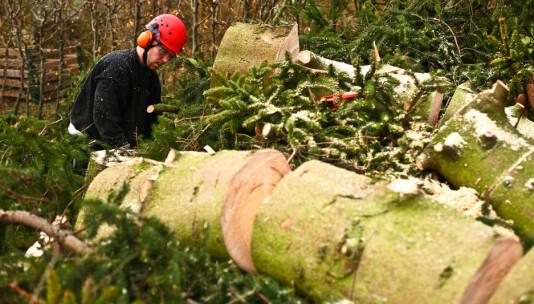 – Ingen automatikk at trevirket kommer fra bærekraftig skogbruk