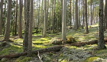 Gammel skog kan være viktig for karbonfangst