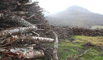 Store ubrukte bjørkeressurser i Trøndelag