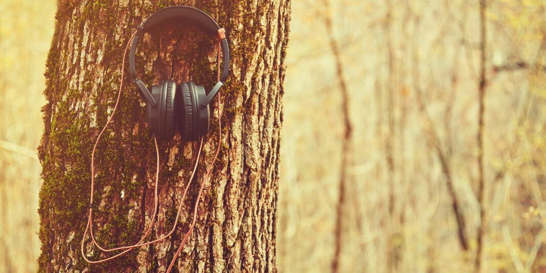To nye podkaster om skog- og trenæringa